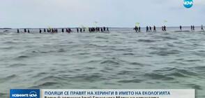 Поляци се правят на херинги в името на екологията (ВИДЕО)
