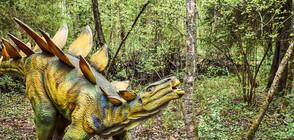Британски палеонтолози откриха в Мароко нов род стегозаври (СНИМКА)