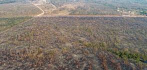 Г-7 ще помага в битката с големите пожари в Амазония