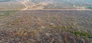 Бразилия няма пари да гаси пожарите в Амазонската джунгла