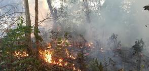 БЕДСТВИЕТО В АМАЗОНКА: Бразилия не може да се справи с пожарите (ВИДЕО+СНИМКИ)
