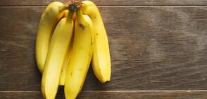 Изчезват ли бананите?