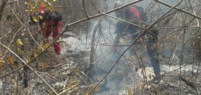 Пожари опустошиха близо милион хектара в Боливия (ВИДЕО)