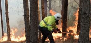 Голям пожар край Харманли, горят 1000 декара гори и ниска растителност (ВИДЕО)