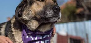 Credissimo търси нов дом на кучета от ферма за изоставени животни в Пазарджик