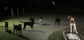 Глутница бездомни кучета тормози цял квартал
