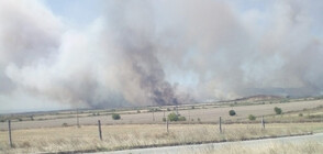 Голям пожар обхвана борова гора край Нова Загора (ВИДЕО+СНИМКИ)