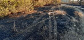 Пожар край Хасково застрашава борова гора
