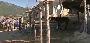 Единият от нападателите на детето в Сотиря блудствал с жертвата и преди месец