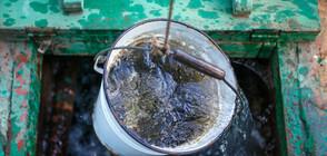 Кал тече от чешмите в Левски (ВИДЕО)