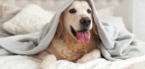 Кучетата обичат да се гушкат през нощта