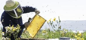 Пчелари на бунт, искат затвор за ползването на пестициди