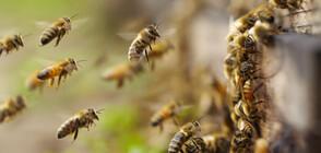 Рояк пчели се залепи върху самолет на Еър Индия (СНИМКИ)