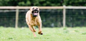 Задържаха собственика на домашното куче, което нахапа двама души в центъра на Варна