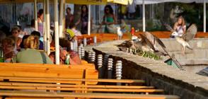 Над 7000 нарушения на работодатели в морските курорти установила ГИТ