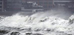 Мощен тайфун причини щети и леки травми в Южна Корея (ВИДЕО+СНИМКИ)