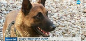 СЛЕД 12 ГОДИНИ ВЯРНА СЛУЖБА: Отиде си спецът в откриването на наркотици - кучето Вихрен