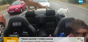 """""""Пълен абсурд"""": Да разхождаш котки с кабриолет"""