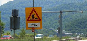 ВНИМАНИЕ: Ограничение за движението на автомобили по пътя Кричим - Девин
