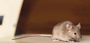Мишка падна от тавана по време на пресконференция в Белия дом (ВИДЕО)