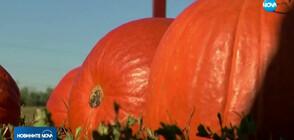 ТИКВИ В НЕБЕТО: В Индиана се надстрелваха с част от реколтата