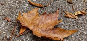 Златна есен цяла седмица