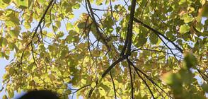 Близо еднометрова игуана свалиха от липа в Стара Загора (СНИМКИ)