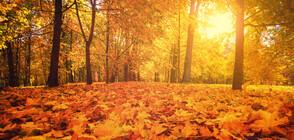 Есен без настинка: Полезни съвети
