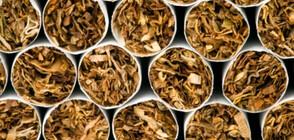 Разбиха престъпна група за разпространение на тютюн