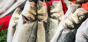БАБХ изтегли от пазара над 250 кг заразена с Листерия пушена риба