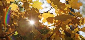 Слънчево и топло до края на седмицата, сняг в началото на ноември