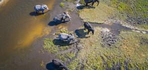 55 слона умряха от глад през последните два месеца в Зимбабве
