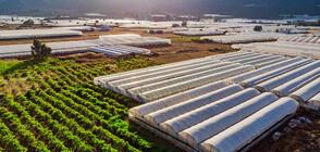Оранжерийните производители кандидатстват за помощ за борба с вредителите