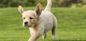 Куче с цвят на мента се роди в Германия (СНИМКА)