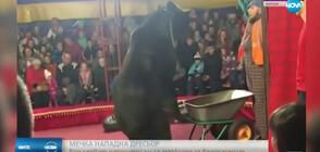 Циркова мечка нападна и рани дресьора си (ВИДЕО)