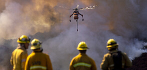 Шварценегер и Леброн Джеймс – принудени да бягат от пожарите в Калифорния