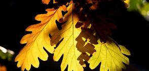 Есента напомни за себе си, но идва ново затопляне