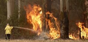 Бедствено положение заради пожарите в Австралия (ВИДЕО+СНИМКИ)