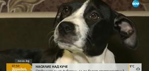 НАСИЛИЕ НАД КУЧЕ: Отвличат ли се животни, за да бъдат препродадени? (ВИДЕО)