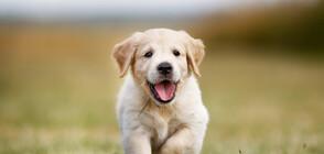 Кученце се роди с опашка на челото (ВИДЕО+СНИМКИ)