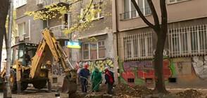 Режат ли се корени на дървета при ремонт в София?