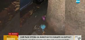 Кой ръси отрова за животни по улиците на Бургас?