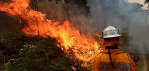 Огнеборците не могат да се справят с огромния пожар край Сидни