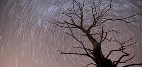 Леонидите носят дъжд от звезди (ВИДЕО+СНИМКИ)