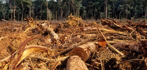 Обезлесяването в Амазония - с рекордно ниво от години насам