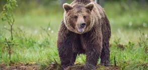 Мъж откри мечка в колата на майка си (ВИДЕО)