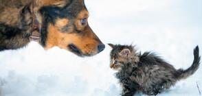 Бездомно куче спаси 5 котенца от измръзване (СНИМКИ)