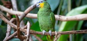 Откраднаха рядък вид папагал в Добрич
