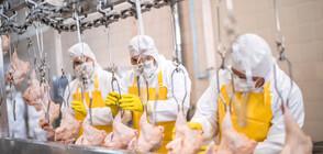Проф. Кантарджиев: Основната причина за салмонела е недобре съхранена храна