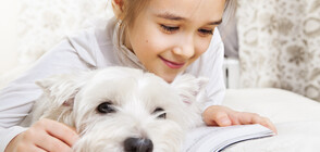 Децата четат повече, ако в стаята има куче